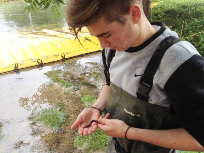 Электрическая рыбалка для перемещения водной фауны на место работы во время работы.